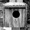 A tiny bird home found near a cottage seen on Sandy Neck\'s trail 2 facing the marshes. Cape Cod, MA