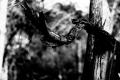 Predator Trees Are Everywhere...EVERYWHERE...One of the trails on Assateague Island National Seashore. Chincoteague, VA