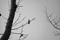 Birds at Boardwalk Trail. Bombay Hook National Wildlife Refuge Smyrna, DE