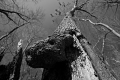 Predator Trees Are Everywhere. Parson Point Trail. Bombay Hook National Wildlife Refuge Smyrna, DE