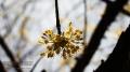 Spring in Central Park, NY