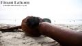 Bilal mutated after a while. Taken at Coronado beach in Coronado Island. San Diego, CA