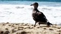 A Bird on the beach. Laguna Beach, CA.