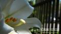 Mimi\'s Sacred Garden... City Island, NY