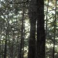 Penwood State Park