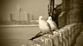 Roosevelt Island, tram, East River, Manhattan, New York, NYC, The Big Apple,Chapel of the Good Shepherd,sculpture of E pluribus unum,