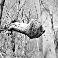 On the trails of Fairmount Park Near Wissahickon Philadelphia, PA